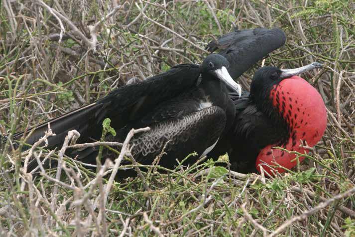 Galapagos Birds review