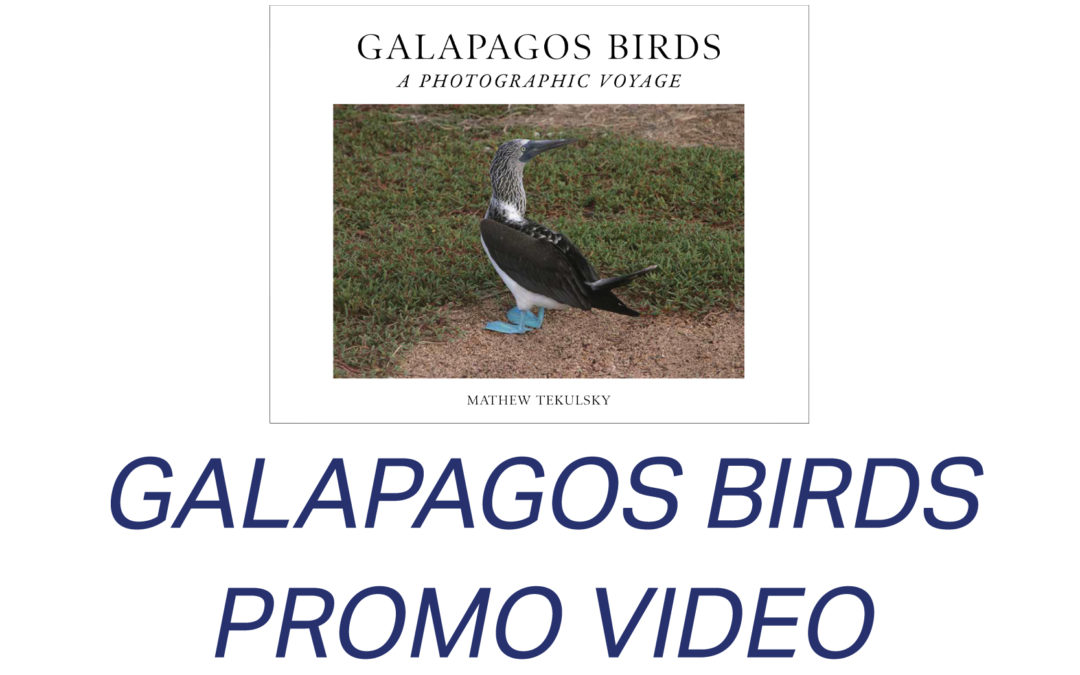 Galapagos Birds promo video