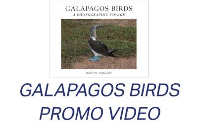 Galapagos Birds promo video
